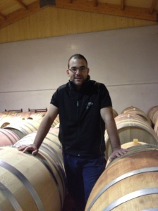 Overseeing Monastrell grapes