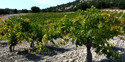 monasterio vineyard