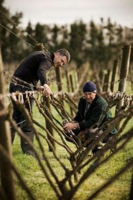 Milan & Mark in Vineyard