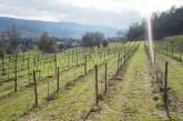 aphros vineyard