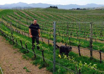 healthy vineyard