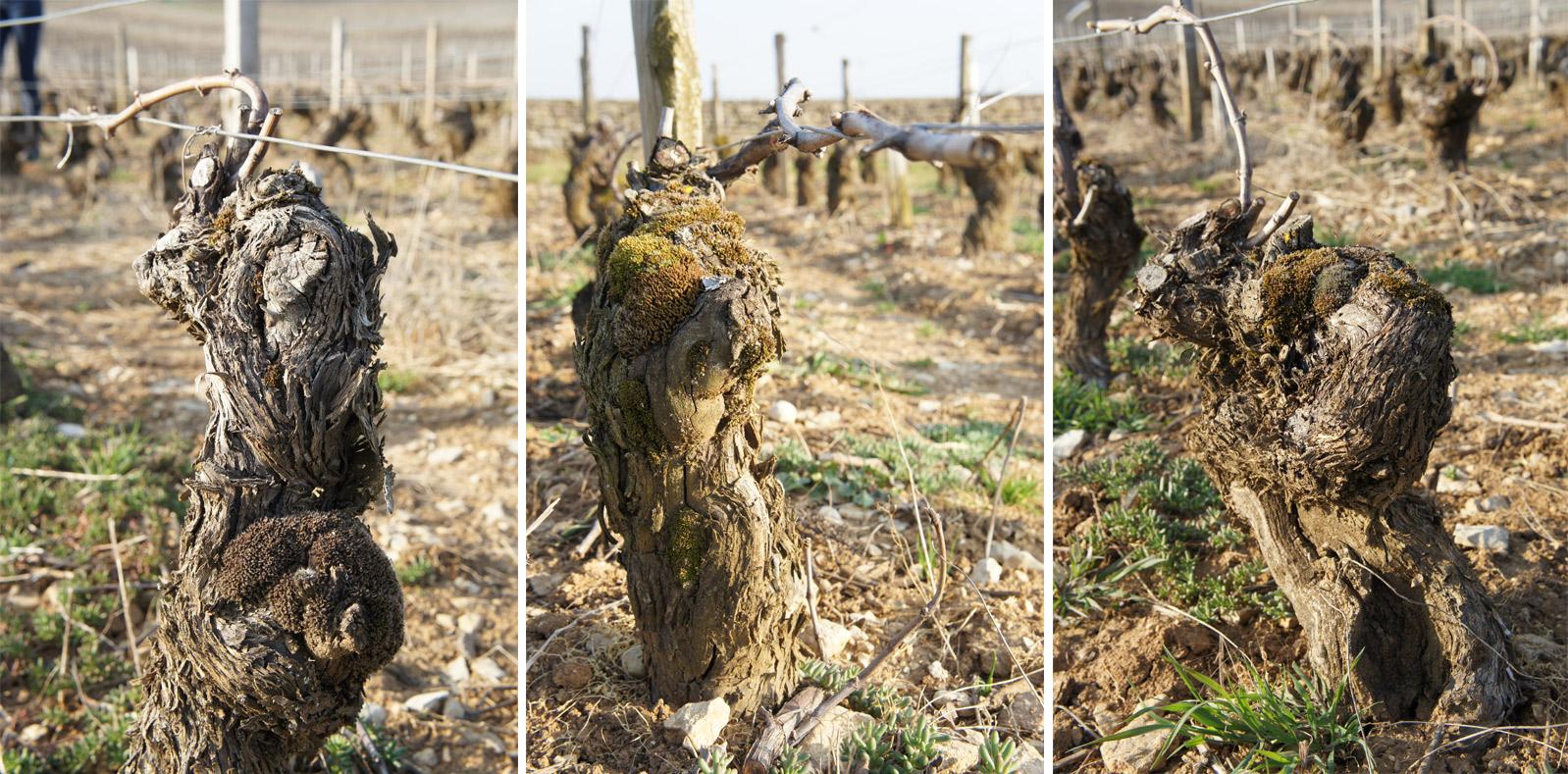 delagrange-old-vines-2