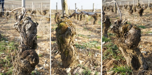 delagrange-old-vines-2