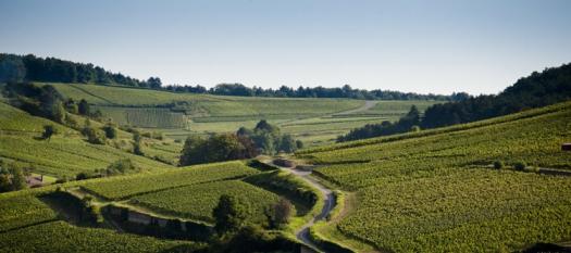 HCdB vineyard