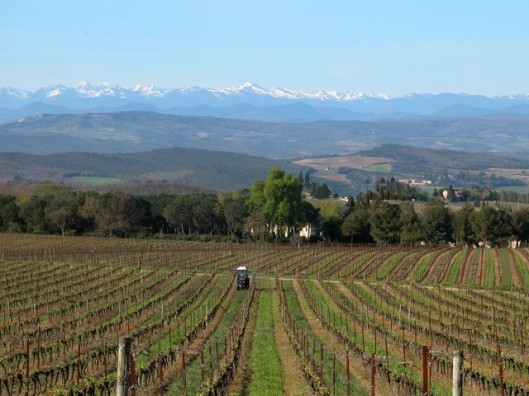 limoux vineyard