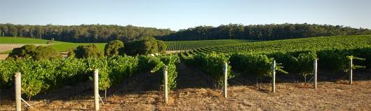 vineyards9
