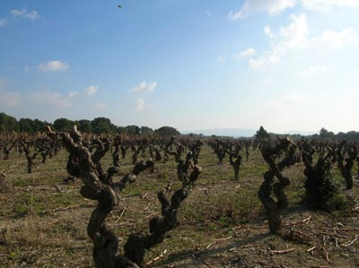 vineyard aires hautes