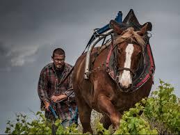 marcel horse